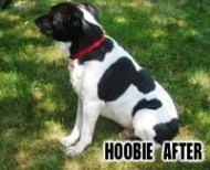 Hoobie After