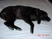 Jasper - 2011-1