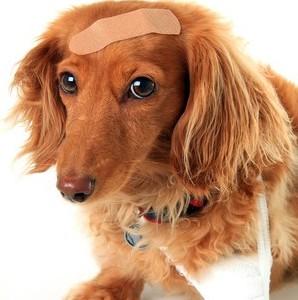 InjuryorTraumaDogs
