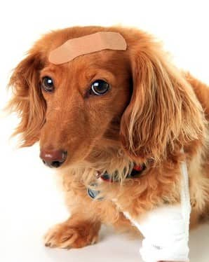 Injury, Surgery and Trauma in Dogs