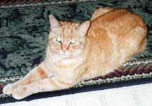 morris_cat_hit_by_a_car_recovery_story