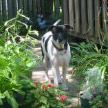 Hoobie: Dogs Skin Problems were Blamed on Allergies