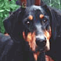 Luis: Doberman Struggles with Disc Disease & Surgery Recovery