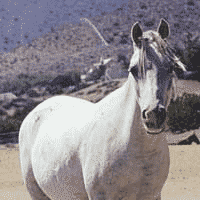 Sampson, Lame Horse with Muscle Atrophy