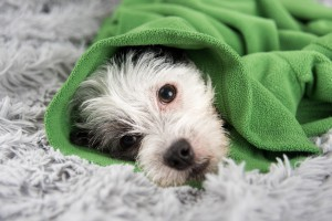 dog respiratory problems
