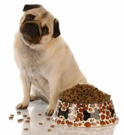 digestive disorders in dogs
