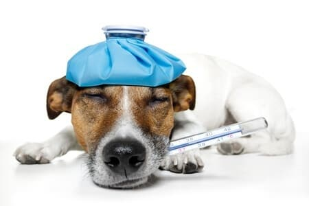 10 Facts About the Dog Flu