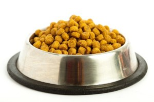 food for dog digestive disorder