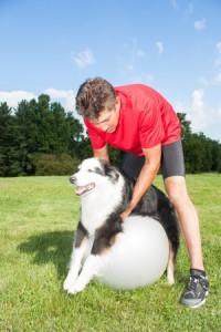 dog arthritis therapy