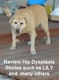 dysplasia-stories