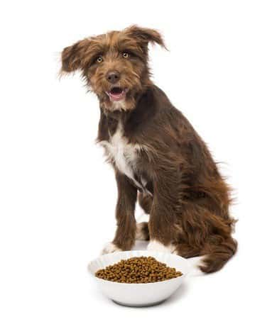 nutrition to fight dog arthritis