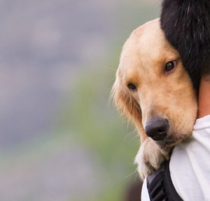 what causes dog seizures in labs