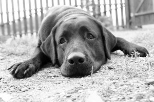 what causes dog seizures
