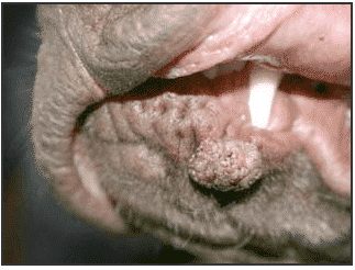 Oral Growths or Papilloma Warts in Dogs - NZYMES