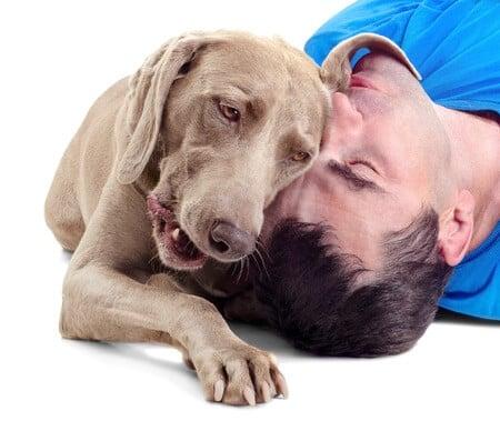 Dog Bloat & Torsion Problems