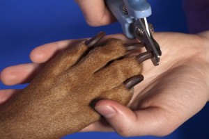 picking a dog groomer for clipping nails
