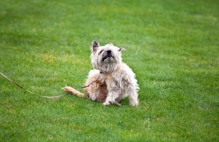 Natural Solutions for a Dog's Itchy Skin
