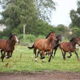 Enhancing Horse Endurance and Recovery