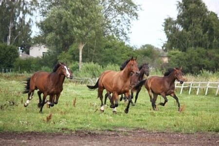 Horses need endurance
