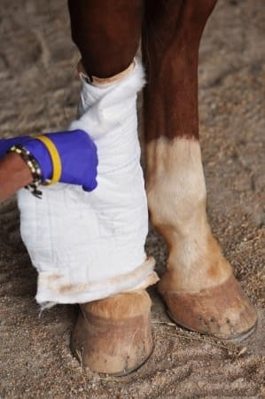 Horse Injury and Recovery