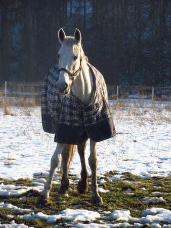 Pneumonia in Horses