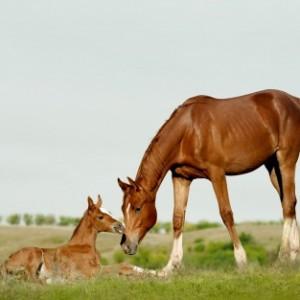 HorseMareFoal