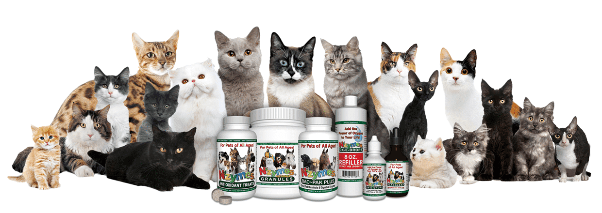 Cats and Natural Health optoins