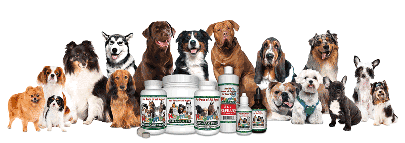 dog breeds helped by nzymes