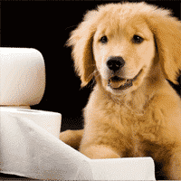 Causes of Diarrhea in Dogs You Might Not Know