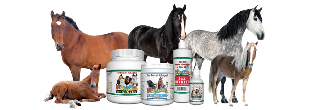 NZYMES Supplements for Horses
