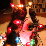 Protecting your Pet from Holiday Pet Dangers