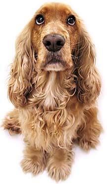 addisons-dog