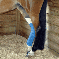 Slow Recovery Time in Horses