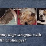 VIDEO Examples: NZYMES vs. Dog Health Challenges