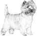 Honey, Cairn Terrier & Failing Allergies Treatments