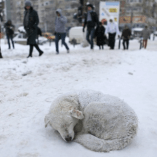 Homeless Animals & Winter – Keeping Them Safe