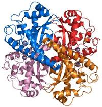 SOD Molecule
