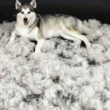Shedding or Hair Loss in Dogs or Cats