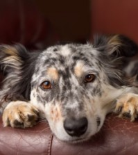 dogs-and-bronchitis-feature