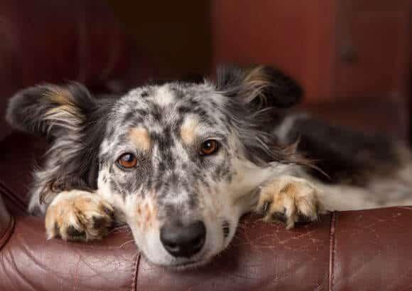 do dogs get bronchitis