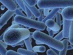 Bacteria_240x180