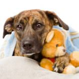 Kennel Cough in Dogs, Natural Answers