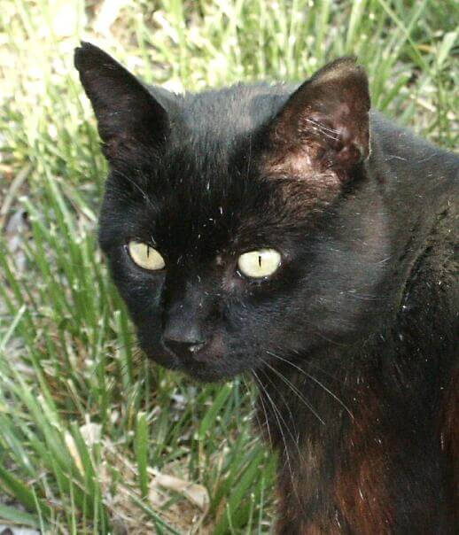 Cat Recovery Story – Accident, Injury, & Itchy Skin Problems