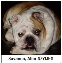 Savanna, after nzymes