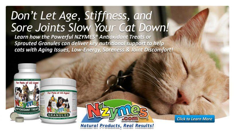 aging cat advice