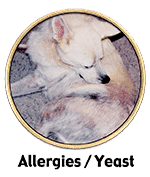 Nzymes success stories for dog skin allergies and yeast problems