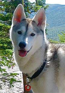 Kimmi the Husky Says Goodbye to Dog Wart