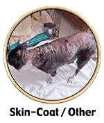 skin and coat issues and customer success