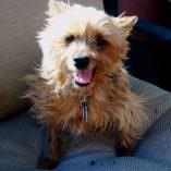 Noni, A Puppy-Mill Survivor Handles Seizures