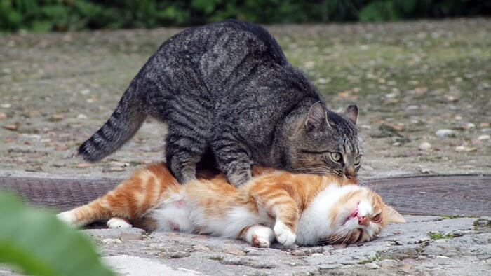 cat helping cat in need